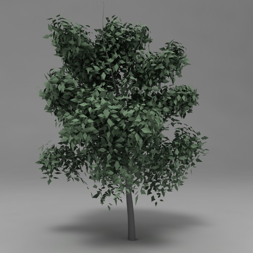 Tree 003